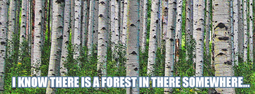 ForestTrees